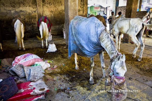 Banaras_blog_vishal tomar_20
