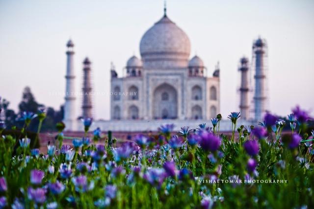 Taj Mahal_VishalTomar_2016_08