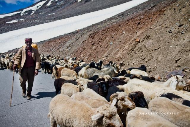 16_Vishal Tomar_Ladakh_2016
