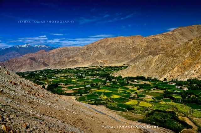 25_Vishal Tomar_Ladakh_2016